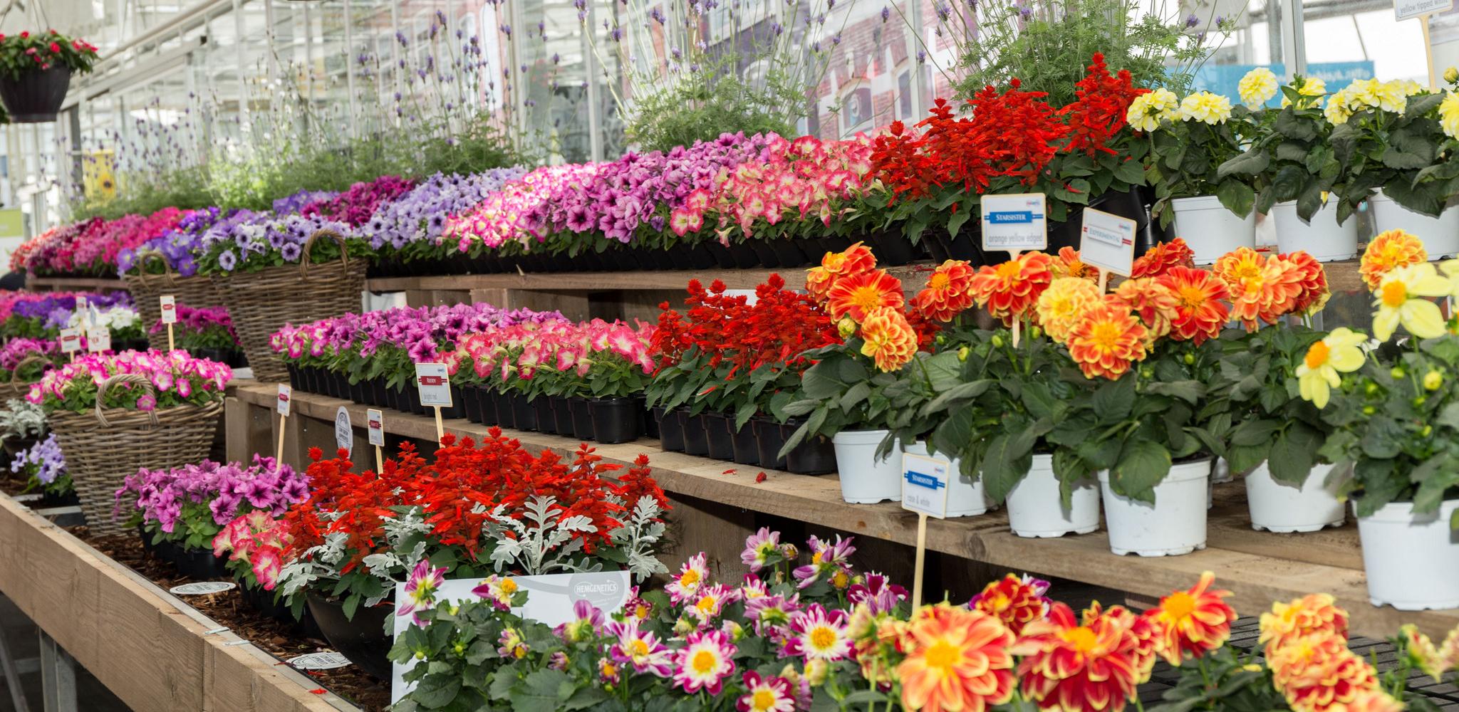 FlowerTrials