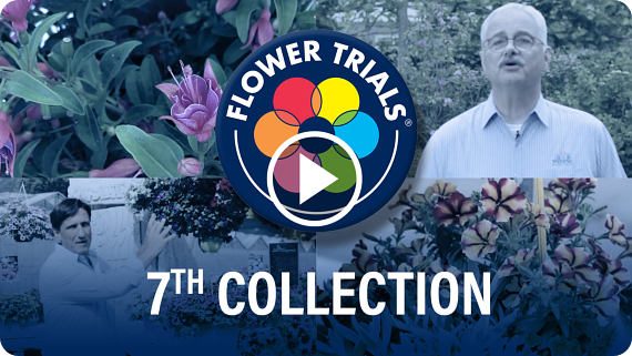 FlowerTrials 2020 Highlights
