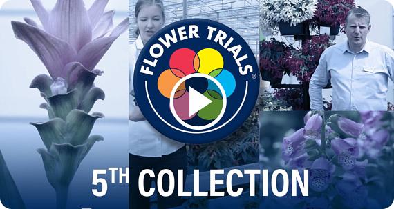 FlowerTrials 2020 Highlights
