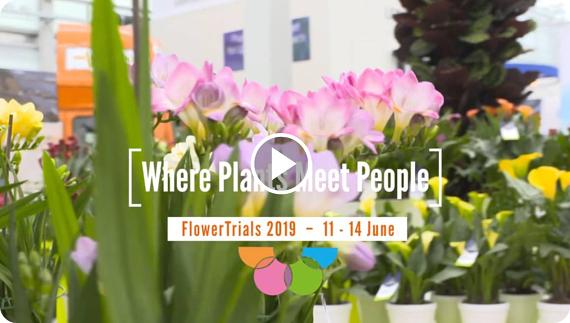 FlowerTrials 2018