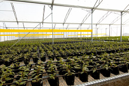 Jaldety Plant Propagation Nurseries - Jaldety - Production site
