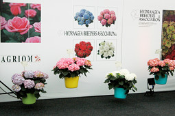 Agriom - Agriom and Hydrangea Breeding Association