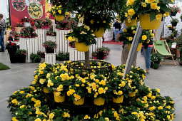 Benary Samenzucht - Nonstop®Joy Yellow - Joy in the Garden!