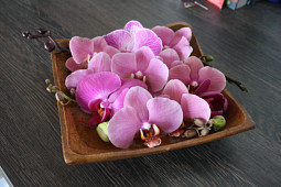 Hassinger Orchideen - Phalaenopsis