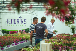Hendriks Young Plants - Hendriks Young Plants - Flower Trials 2017