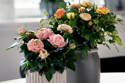 Roses Forever - Pot roses - I am Different®