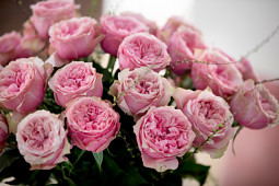 Roses Forever - Rosa Loves Me® With Heart and Soul™