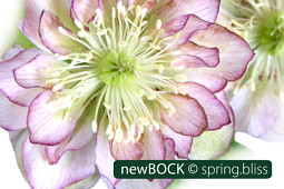 BOCK Bio Science GmbH - DoubleEllen®_spring.bliss-5876