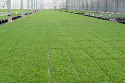 Gruppo PADANA - Young Plants production