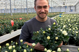 Roses Forever - Production Infinity® white pot rose 10.5 cm pots