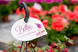 Hendriks Young Plants - Bella Fuchsia label