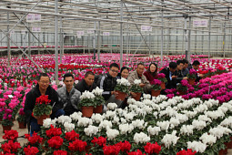Varinova Operations BV - Cyclamen Trials 2018