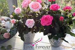 Roses Forever - Pot roses - Love Fragrance Forever®
