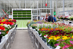 Beekenkamp Plants BV - YOUNG PLANTS