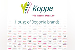 Koppe Begonia - House of Begonia Brands