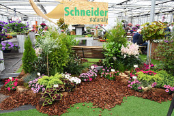 Schneider youngplants - Flower Trials 2019 - Schneider youngplants