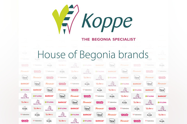 House of Begonia Brands