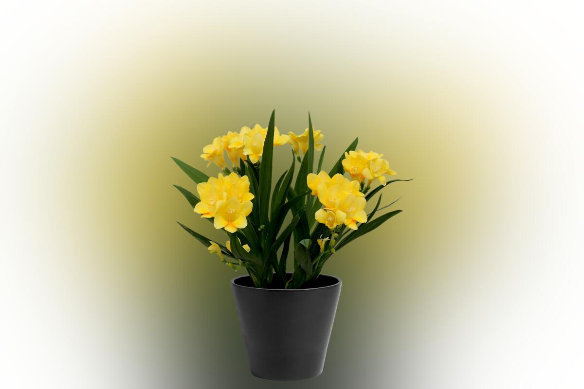 Berühmt Van den Bos Flowerbulbs #AD_96