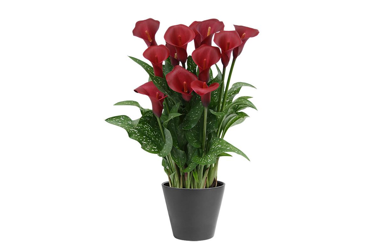 Ganz und zu Extrem Van den Bos Flowerbulbs &EM_75