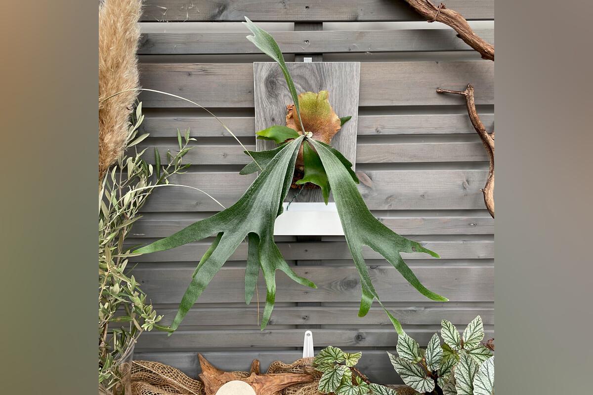 hassinger orchideen. Black Bedroom Furniture Sets. Home Design Ideas