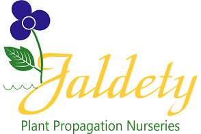 Jaldety Plant Propagation Nurseries