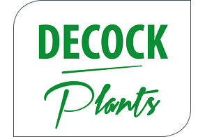 Decock Plants BVBA